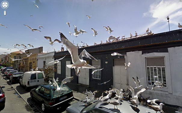 Pigeon Attact