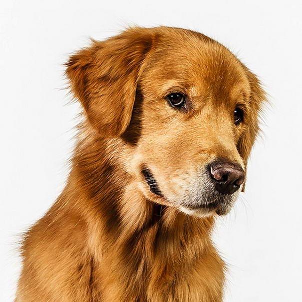 dog photos by barbara obrien-02