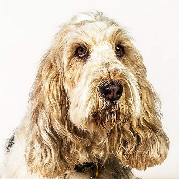 dog photos by barbara obrien-03