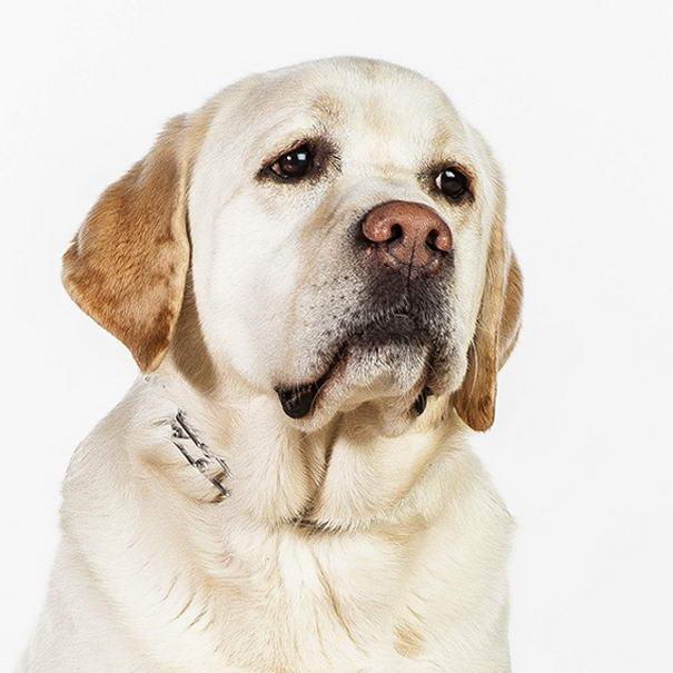 dog photos by barbara obrien-04