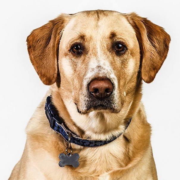 dog photos by barbara obrien-06