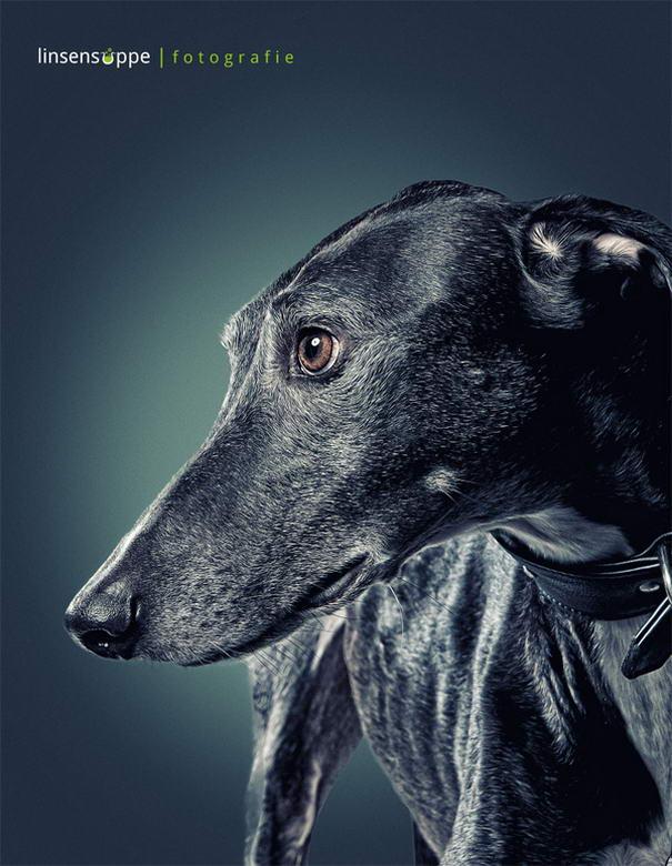 Dog Portraits By Daniel Sadlowski (7)