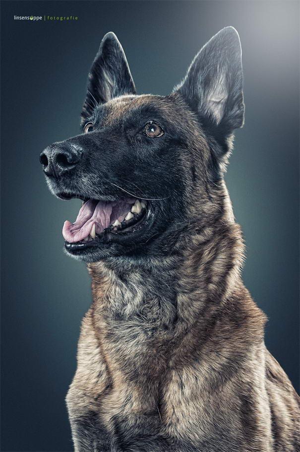 Dog Portraits By Daniel Sadlowski (5)