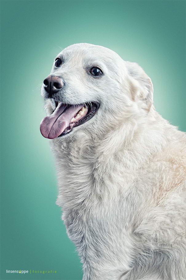 Dog Portraits By Daniel Sadlowski (4)