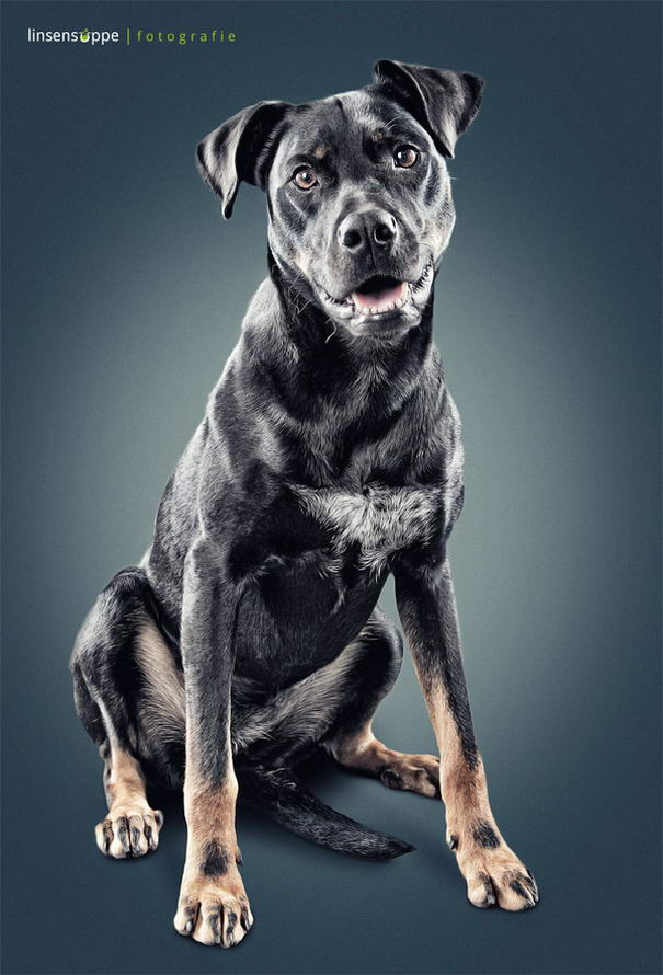 Dog Portraits By Daniel Sadlowski (3)