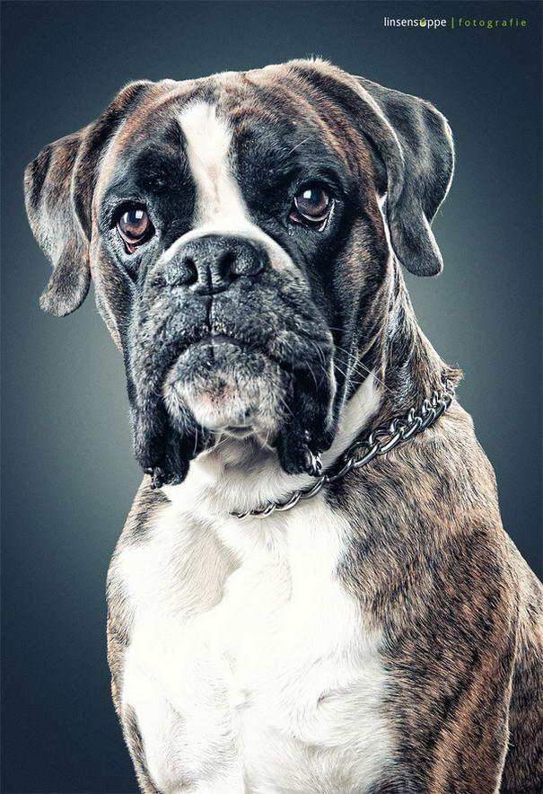 Dog Portraits By Daniel Sadlowski (2)