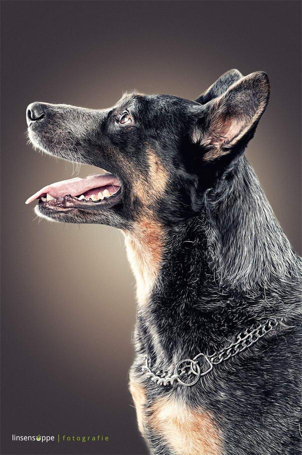 Dog Portraits By Daniel Sadlowski (1)