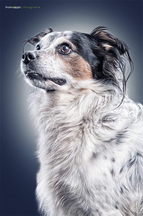 Dog Portraits By Daniel Sadlowski (9)