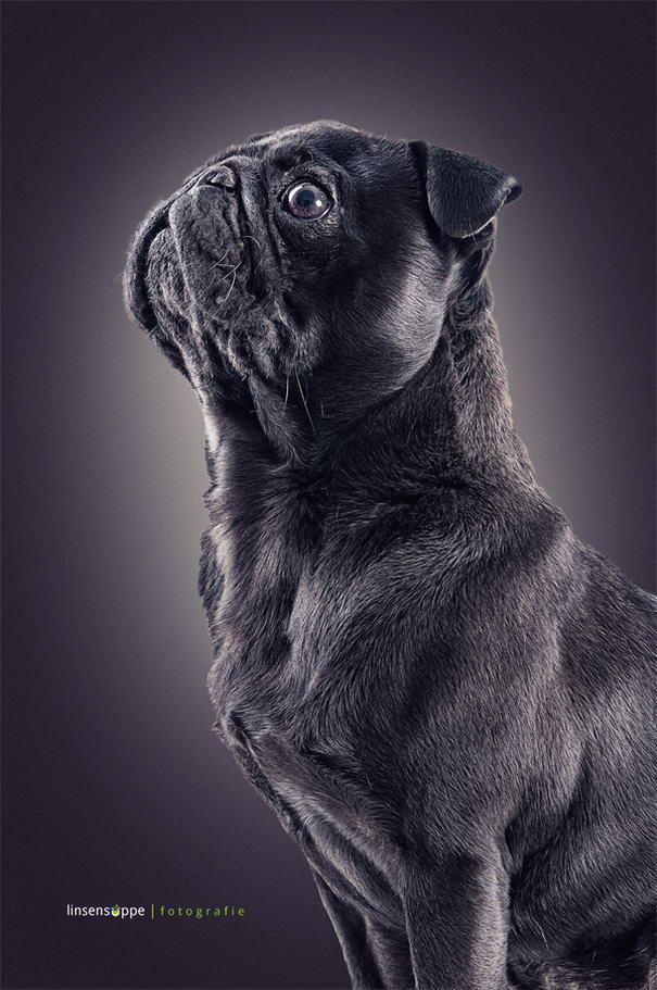 Dog Portraits By Daniel Sadlowski (10)