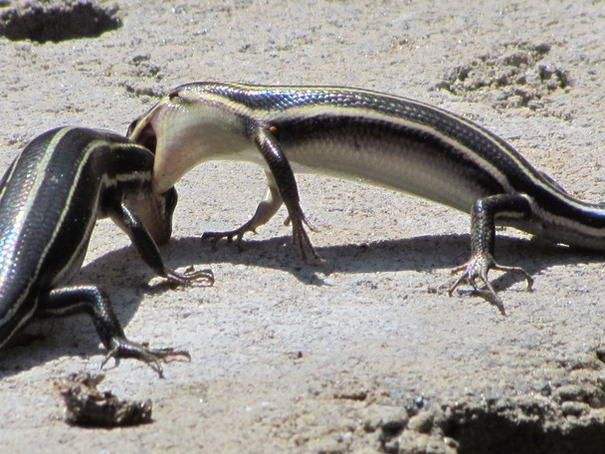 Photo and caption by Linda Bradley