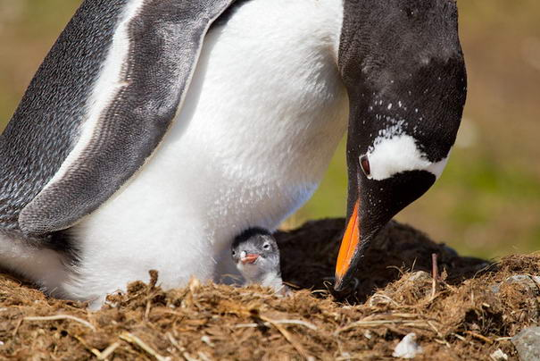 Photo and caption by Ondrej Zaruba