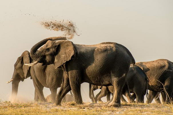 Photo and caption by Robert Hayday