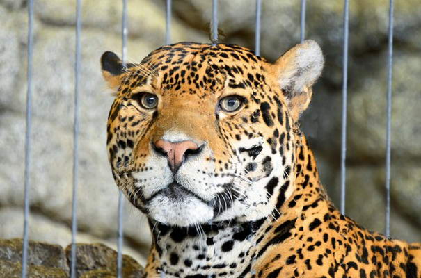 Photo and caption by Robert Tataryn