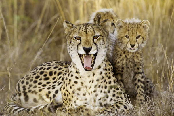 Photo and caption by Scott Belt