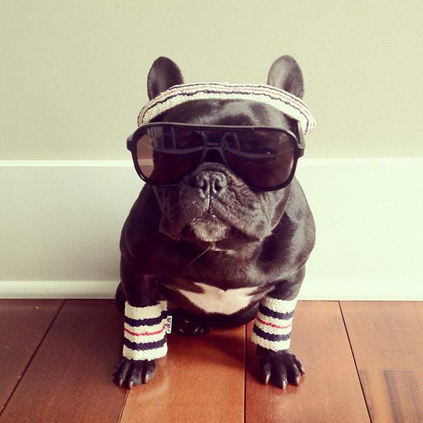 French Bulldog By Sonya Yu (5)