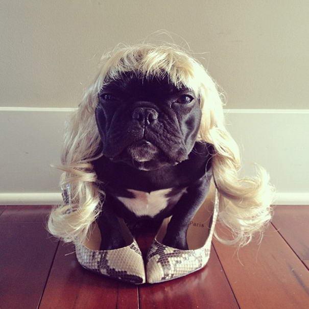 French Bulldog By Sonya Yu (10)
