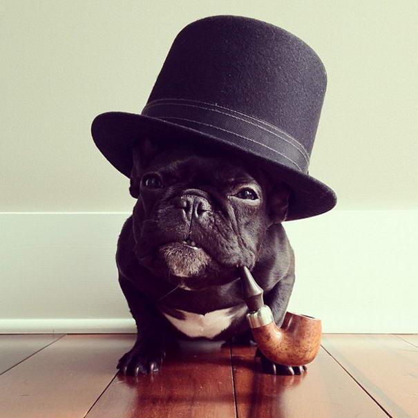 French Bulldog By Sonya Yu (6)