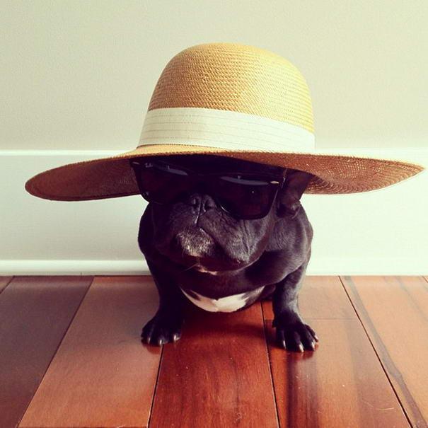 French Bulldog By Sonya Yu (3)