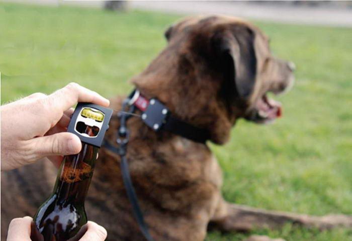 Dog Accessories Bark4Beer Dog Collar