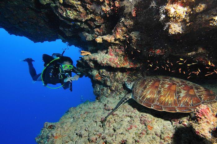 Scuba Diving by cftcouncil