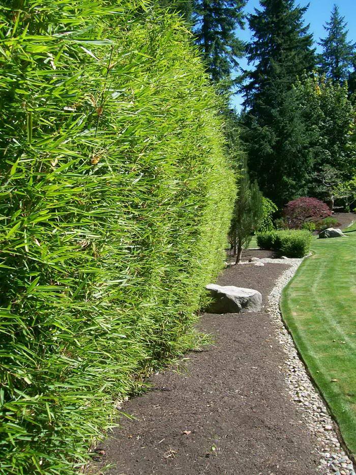Improve Your Garden Vertically Planting