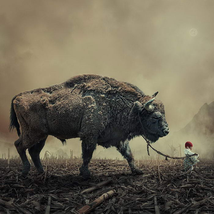 By Caras Ionut © (1)