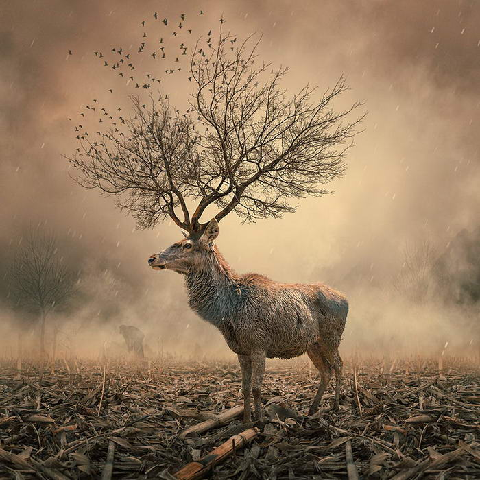 By Caras Ionut © (5)
