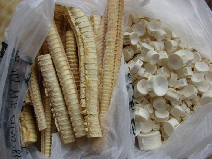 Shark Cartlidge Supplements